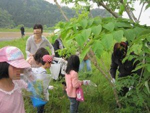 土曜学校山菜採り02