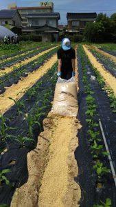 七色のトウモロコシとのことですが どんなのが収穫ですか成長が楽しみです