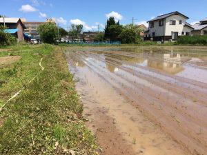 6月1日 田植えも終わりました