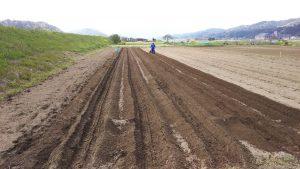 肥料等まき 耕うんして 周りの草を刈って ネギに大丈夫な除草剤をまいた畑です